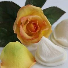 Καλούπια Λουλουδιών