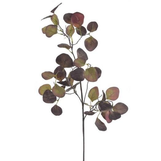 Ευκάλυπτος κλαδί, 70cm, brown