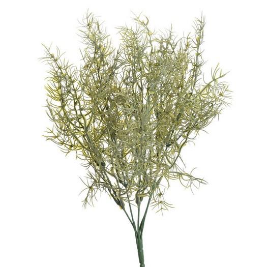 Σπαράγγι φυτό, 36cm, green