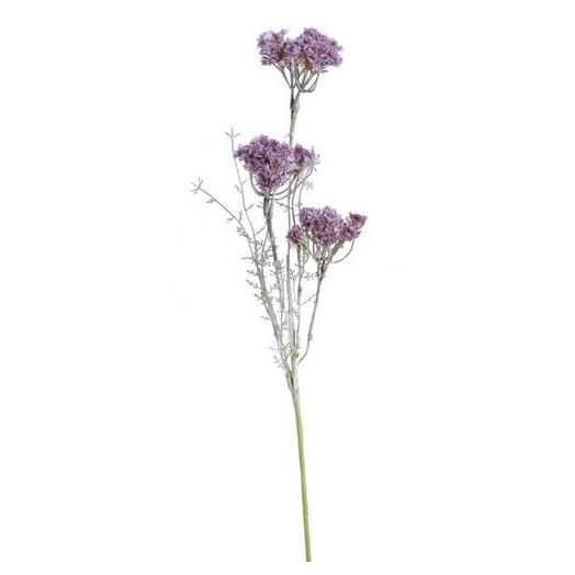 Αχιλλέα χιλιόφυλλο, 58cm, violet