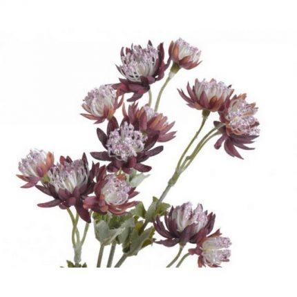 Λουλούδι αστραντία, 66cm, purple