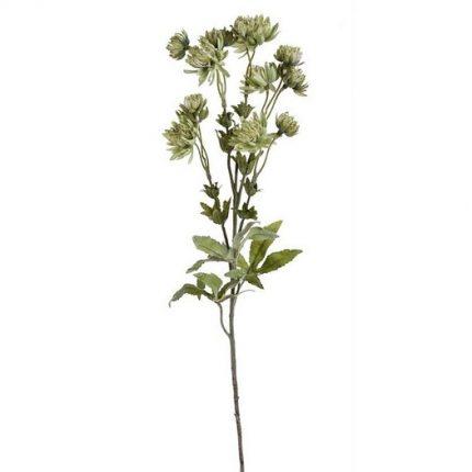 Λουλούδι αστραντία, 66cm, green