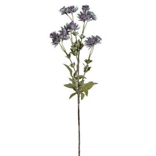 Λουλούδι αστραντία, 66cm, green-violet