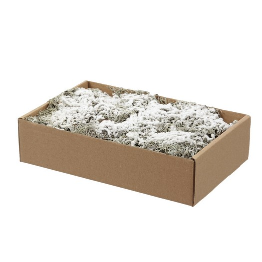 Grey moss, snowfinish (χιονισμένο) 150gr