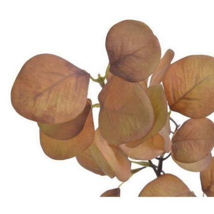 Ευκάλυπτος κλαδί, 70cm, light brown
