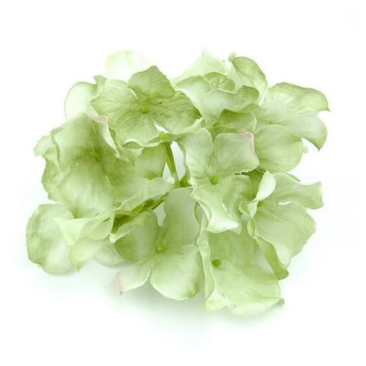 Ορτανσία light green 12cm