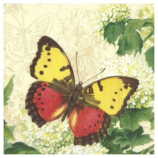 Χαρτοπετσέτα για Decoupage, Butterfly summer cream, 1τεμ.