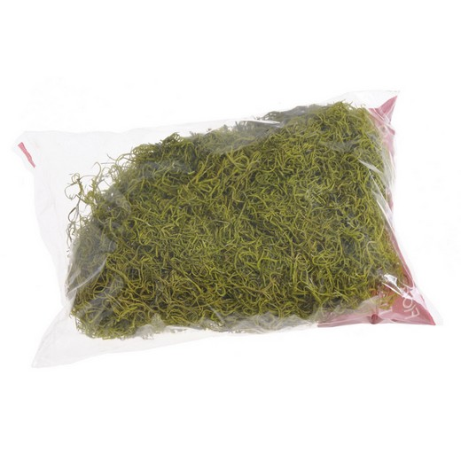 Moss τιλάνσια για συνθέσεις, 100γρ., light green
