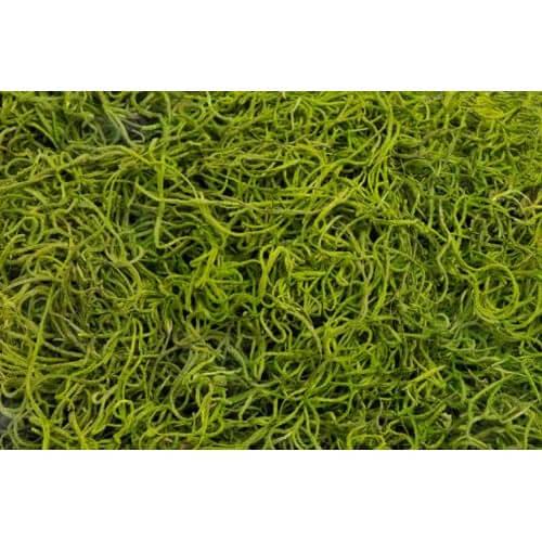 Φυσικό moss τιλάνσια για συνθέσεις, green, 300γρ.