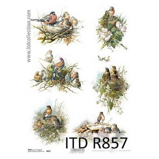 Ριζόχαρτο ITD, 21x29cm, Πουλάκια σε φωλιές, R857