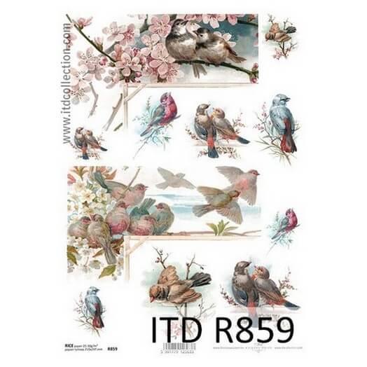 Ριζόχαρτο ITD, 21x29cm R859