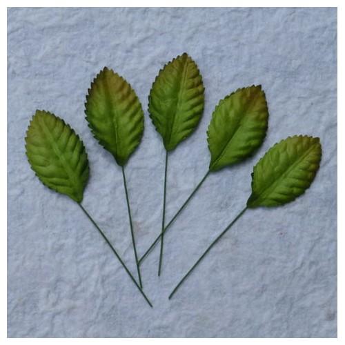 Φυλλαράκια πράσινα, 35mm, 10 τεμ.