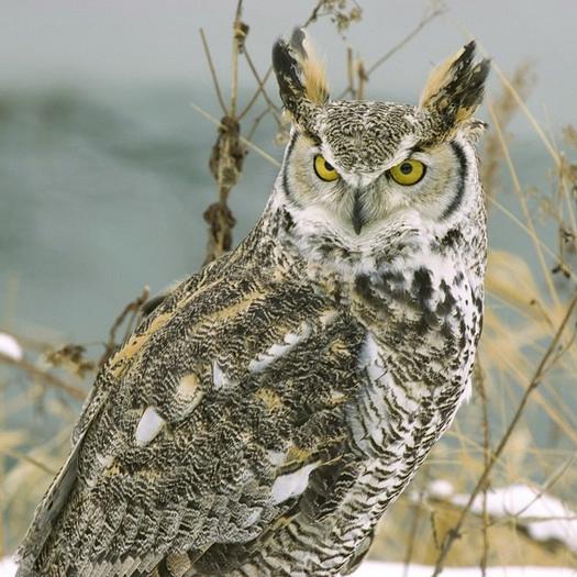Χαρτοπετσέτα για Decoupage, Owl, 1τεμ