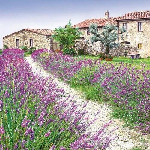 Χαρτοπετσέτα για decoupage, Lavender Farm