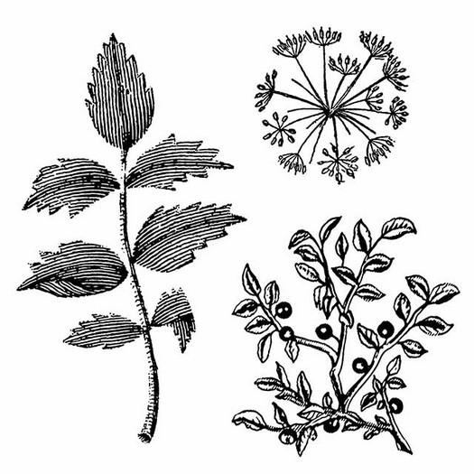 Σφραγίδα HD 10x10, Stamperia Herbarium