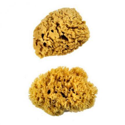 Σφουγγάρια Θαλάσσης,2 τεμ. XL