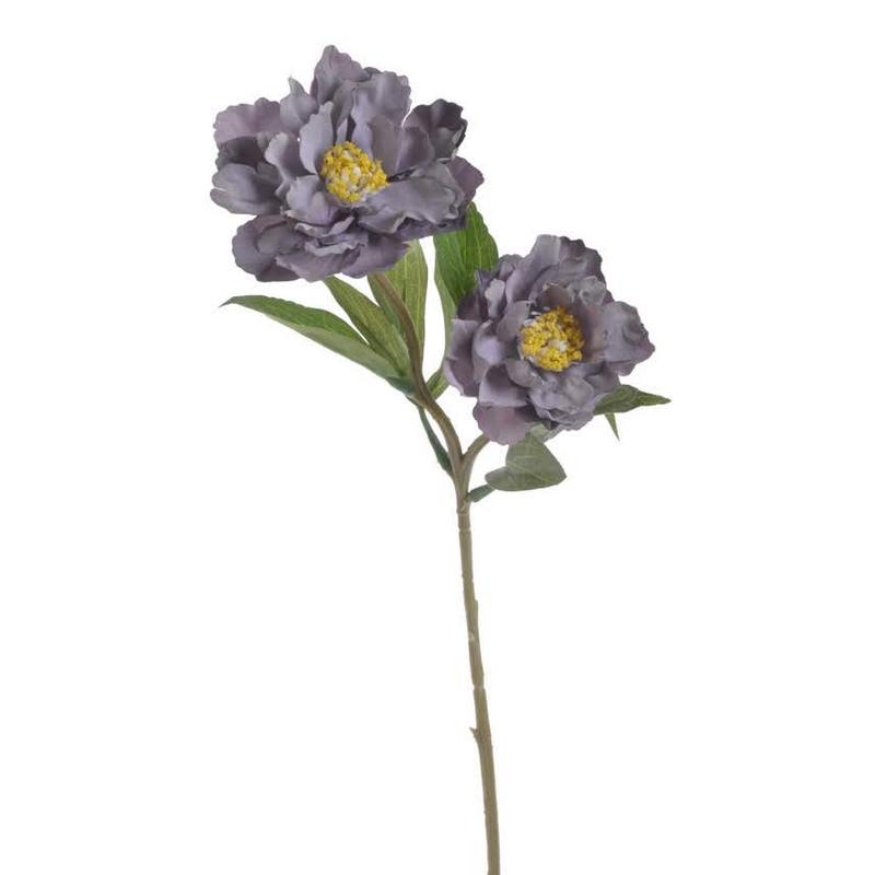 Παιώνια, purple, 54cm