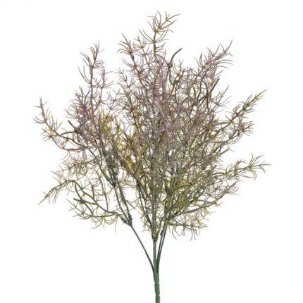 Σπαράγγι φυτό, 36cm, pink