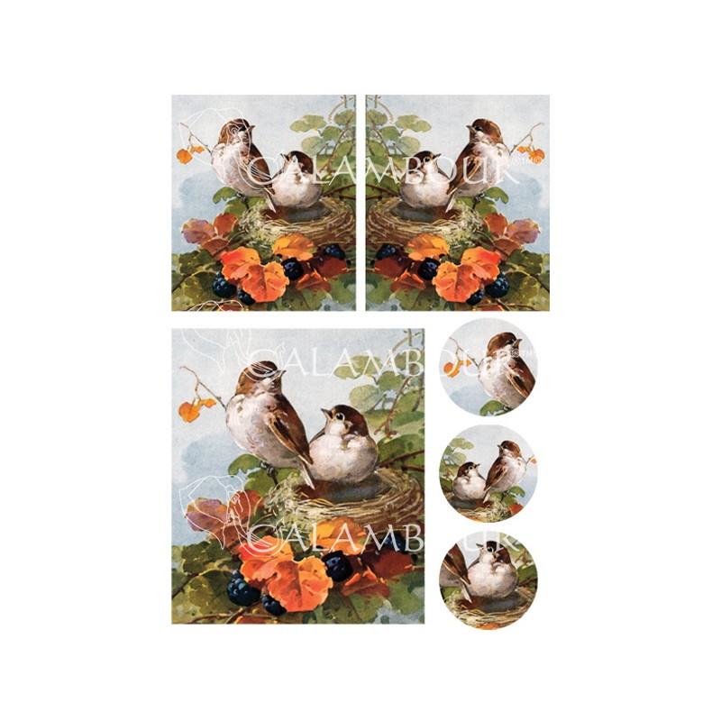 Ριζόχαρτo Maja Collection Πουλάκια στην φωλιά τους 35x50cm